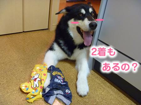 チワワ服04.jpg