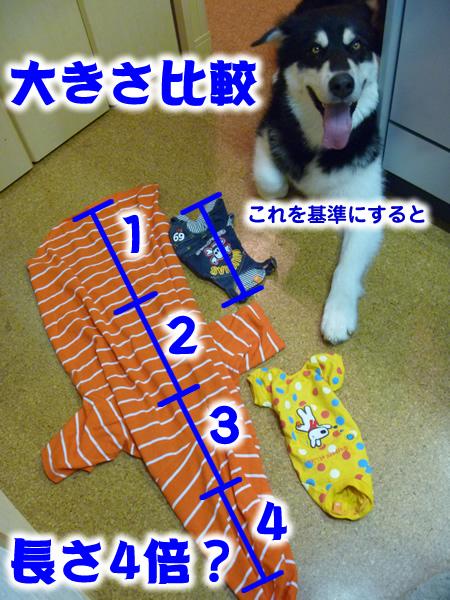チワワ服12.jpg