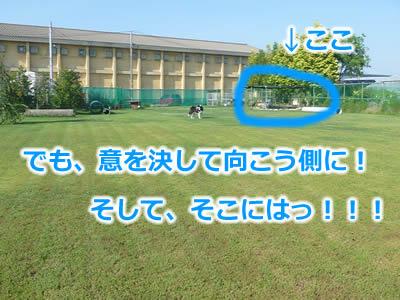 ドックラン風呂5.jpg