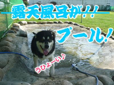ドックラン風呂6.jpg