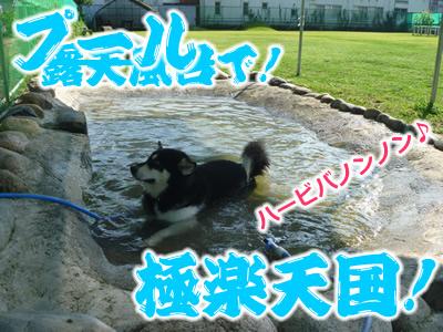 ドックラン風呂8.jpg