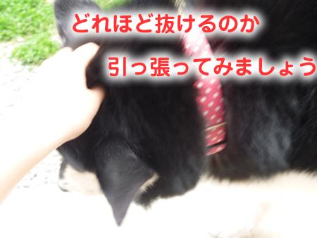 ヌケーホ2.jpg
