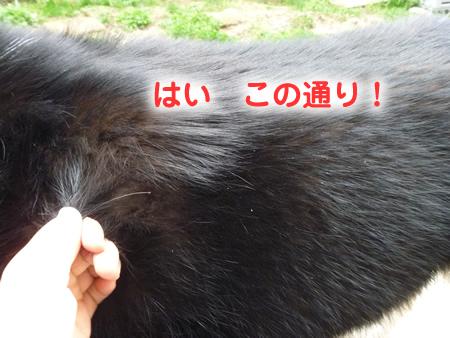 ヌケーホ3.jpg