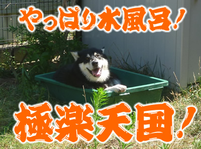 ヌレホーダイ10.jpg