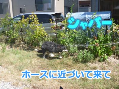 ヌレホーダイ3.jpg