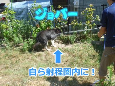 ヌレホーダイ4.jpg