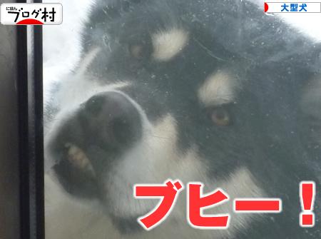 ブヒ犬05.jpg
