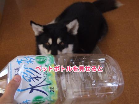 リサイクル01.jpg