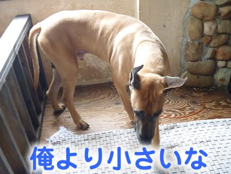 三鬼遊06.jpg