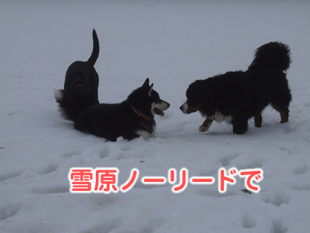 国安201224.jpg