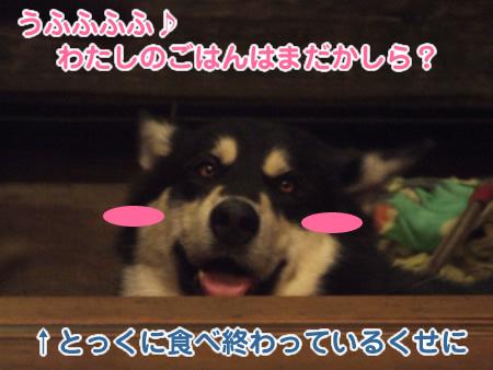 国安続03.jpg