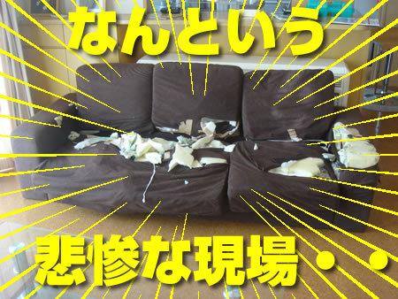 壊されたソファー01.jpg