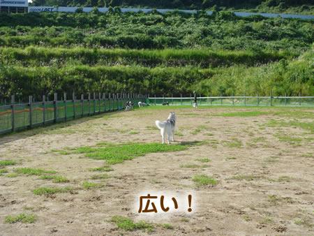 小型犬との境界線の柵.jpg
