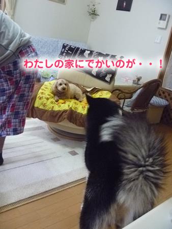 帰り道03.jpg