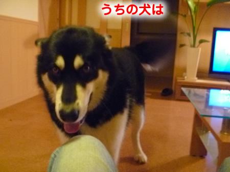怒らない犬01.jpg