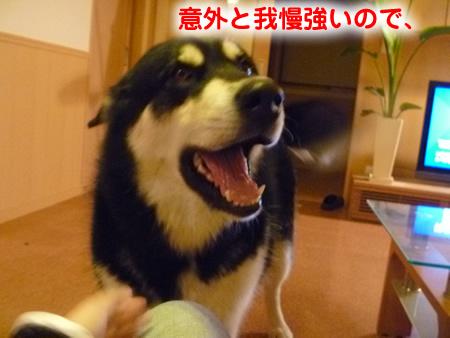 怒らない犬03.jpg