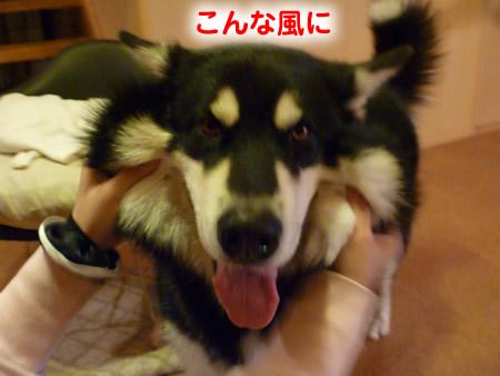 怒らない犬05.jpg