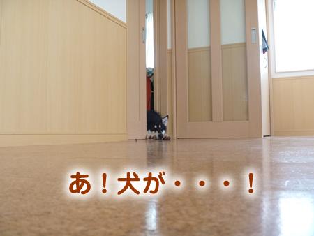 戸Z1.jpg