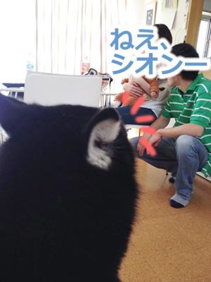 振り向く犬01.jpg