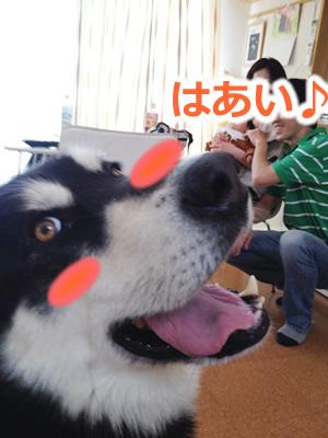 振り向く犬02.jpg