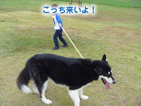 散歩02.jpg