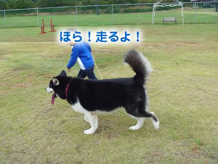 散歩04.jpg