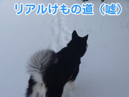 春分の日03.jpg