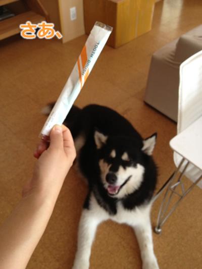 歯磨き犬1.jpg