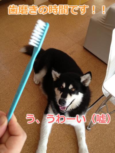 歯磨き犬2.jpg