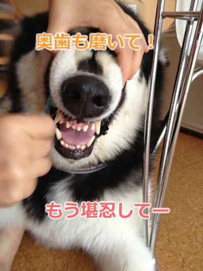 歯磨き犬4.jpg