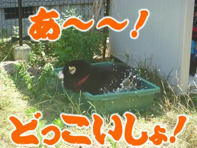 水風呂4.jpg