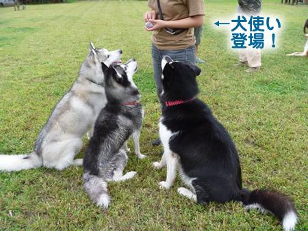 犬使い1.jpg