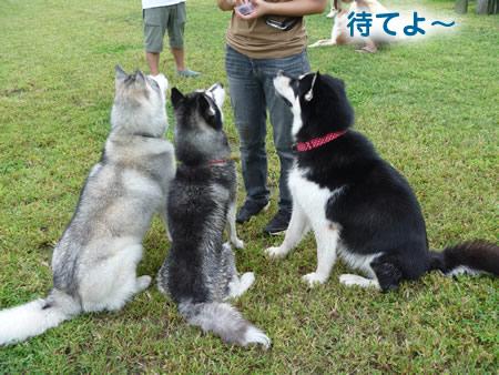 犬使い2.jpg