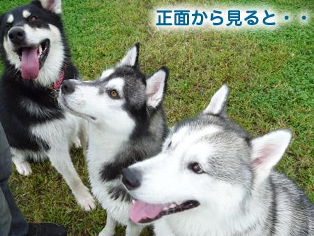 犬使い3.jpg