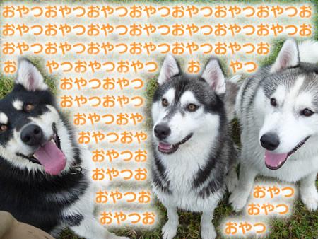 犬使い4.jpg