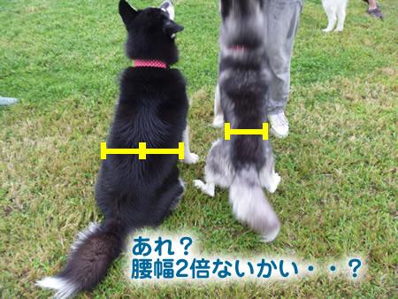 犬使い6.jpg