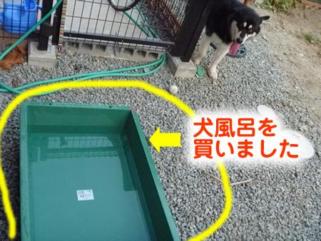 犬風呂01.jpg
