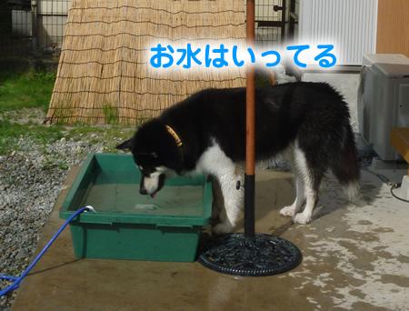 犬風呂02.jpg