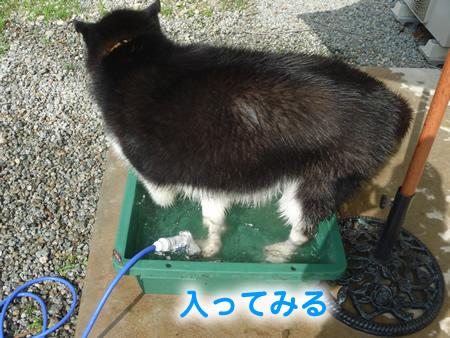 犬風呂03.jpg