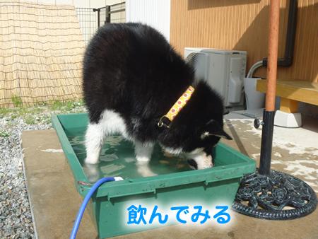 犬風呂04.jpg
