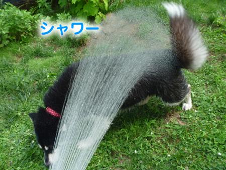 犬風呂08.jpg