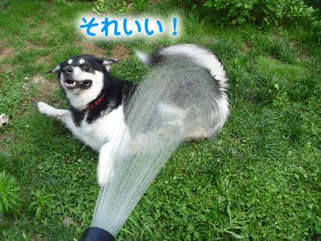 犬風呂09.jpg