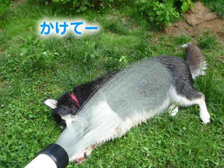 犬風呂11.jpg