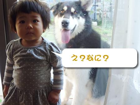背後に犬がいる01.jpg