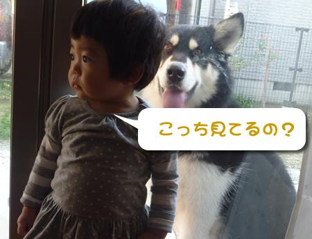 背後に犬がいる03.jpg