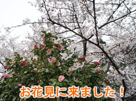 花見1.jpg