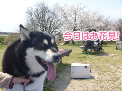 花見鳥屋野潟01.jpg