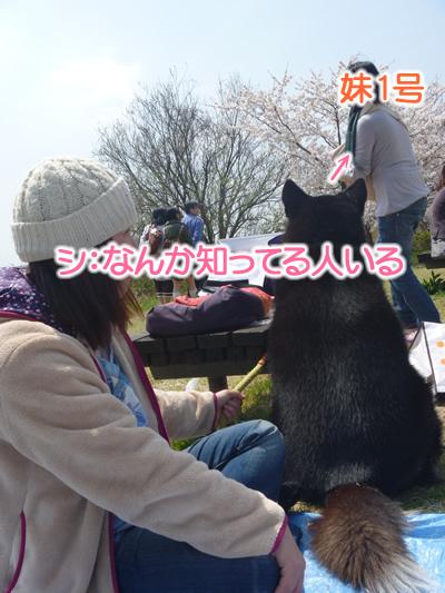花見鳥屋野潟03.jpg