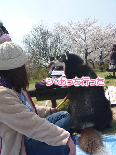 花見鳥屋野潟04.jpg