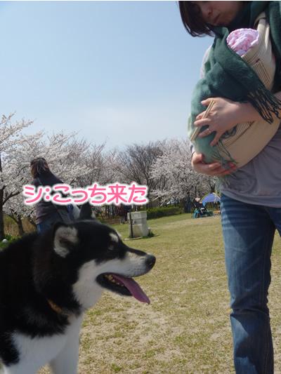 花見鳥屋野潟05.jpg